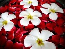 Close-up tropical dos termas Foto de Stock Royalty Free