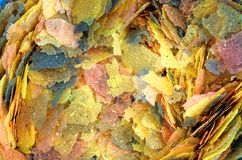 Close-Up of Tropical Fish Food Flakes Royalty Free Stock Images