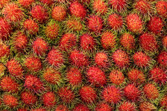 Close up for Tropical Fruits Rambutan for background Royalty Free Stock Photo
