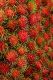 Close up for Tropical Fruits Rambutan for background. Royalty Free Stock Photo