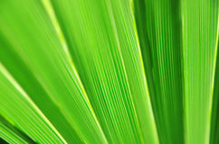 Close up of Tropical Green Leaf Texture use as a Background for Stock Photography