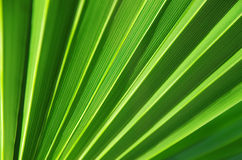 Close up of Tropical Green Leaf Texture use as a Background for Stock Images