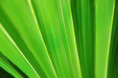 Close up of Tropical Green Leaf Texture use as a Background for Stock Photos