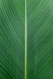 Close up of Tropical Green Leave Texture use as a Background Stock Photos