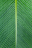 Close up of Tropical Green Leave Texture use as a Background Stock Images