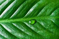 Close Up of Tropical Green Plant Leaf Texture Stock Photo