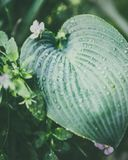 Close up of tropical leaf with water drops. Nature background Stock Photo