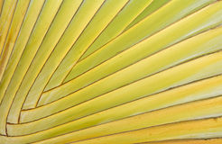 Close-up of tropical palm royalty free stock photo