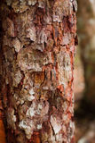 Close up of trunk detail Royalty Free Stock Photo