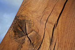 Close up of a trunk Royalty Free Stock Photography