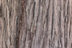 Close up of trunk of tree on in Royalty Free Stock Photography
