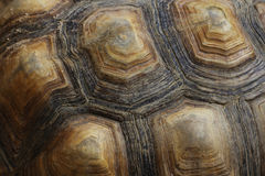 Close up Turtle carapace Royalty Free Stock Image