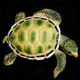 Close up of Turtle. Isolated on black background Royalty Free Stock Photos