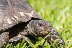 Close up of a turtle looking at the camera having an angry yet funny face. Stock Photos
