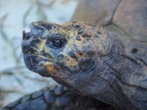 Close-up of a turtle`s head filling almost the entire picture royalty free stock photo
