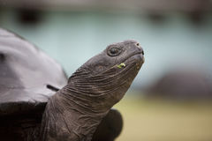 Close up of a turtle's snout Royalty Free Stock Photos