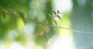 Close-up of twig in park. On a sunny day stock footage