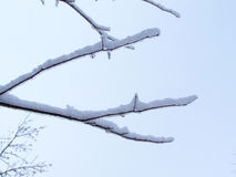 Close-up of twigs covered of ice-Stock photos Royalty Free Stock Photo