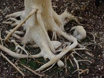 Close up of twisted plant roots Stock Photography