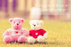 Two bears doll sitting together. Close up two bears doll sitting together, Valentine`s day and love concept Stock Images