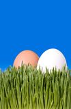 A Close Up Of Two Brown and White Eggs, Nestled In the Green Gra. Ss with Blue Sky Copy Space ~ Clipping Path Royalty Free Stock Images
