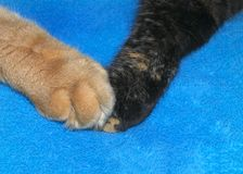 Two kitten paws touching, orange and black. Close up on two cats holding paws. One black cat with orange specks and one orange tabby cat. Different but the same royalty free stock images