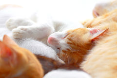 Close up two color cat sleeping Stock Photos