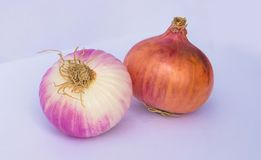 Close up of two fresh onion bulbs stock photo