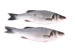 Close up of two fresh seabass fish. Stock Image