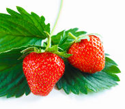 Close-up of two fresh vibrant strawberries Royalty Free Stock Photo