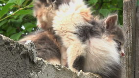Close up on two kitties hiding. Two kitties hiding,cats on a fence stock video