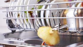 Close-up, two Little yellow ducklings sitting, walking in a dishwasher, sitting on plates, a pan, in a basket. In the. Close-up, two Little yellow ducklings stock video