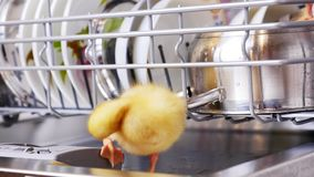 Close-up, two Little yellow ducklings sitting, walking in a dishwasher, sitting on plates, a saucepan, in a basket. In. The background a lot of white, clean stock video footage