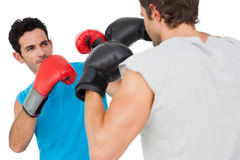 Close-up of two male boxers practicing royalty free stock photos