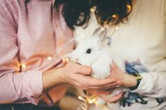 Close up of two people holding white bunny royalty free stock image
