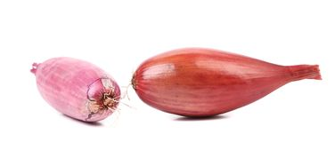 Close up of two red onions. Royalty Free Stock Photo