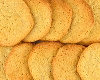 Close up of two rows of homemade peanut butter cookies. Stock Photo