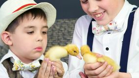 Close-up. Two rustic, stylishly dressed boys play with ducklings, chickens, and a small dog. In the background a stock video