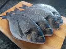Close up of uncooked sea bream. Preparing to cook on a wooden board Stock Photography