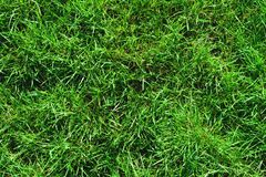 Close-up of uncultivated wild green lawn. View from above. Green juicy grass background for spring and summer.  Royalty Free Stock Photography