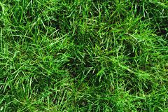Close-up of uncultivated wild green lawn. View from above. Green juicy grass background for spring and summer.  Royalty Free Stock Images