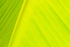 Close-up under banana leaf Stock Photos