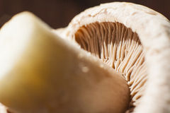 Close-up of underside of champignon mushroom. With seen lamellae and stem Stock Images