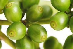Close up of unripe beans Stock Image
