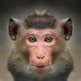 Close-up van aap` s gezicht Stock Afbeelding