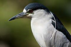 Close-up van Afrikaanse vogel Royalty-vrije Stock Foto's