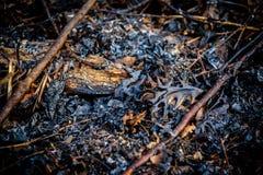 Close-up van bladeren en stokken op grond na bosbrand stock afbeelding
