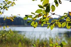 Close-up van bladeren op een boom Stock Fotografie