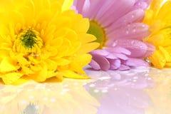 Close-up van bloemen Royalty-vrije Stock Foto's
