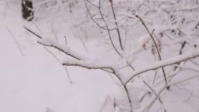 Close-up van boomtak met sneeuw wordt behandeld die stock videobeelden